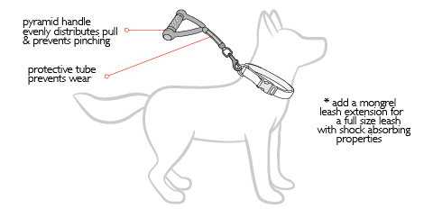 mongrel-dog-diagram.jpg