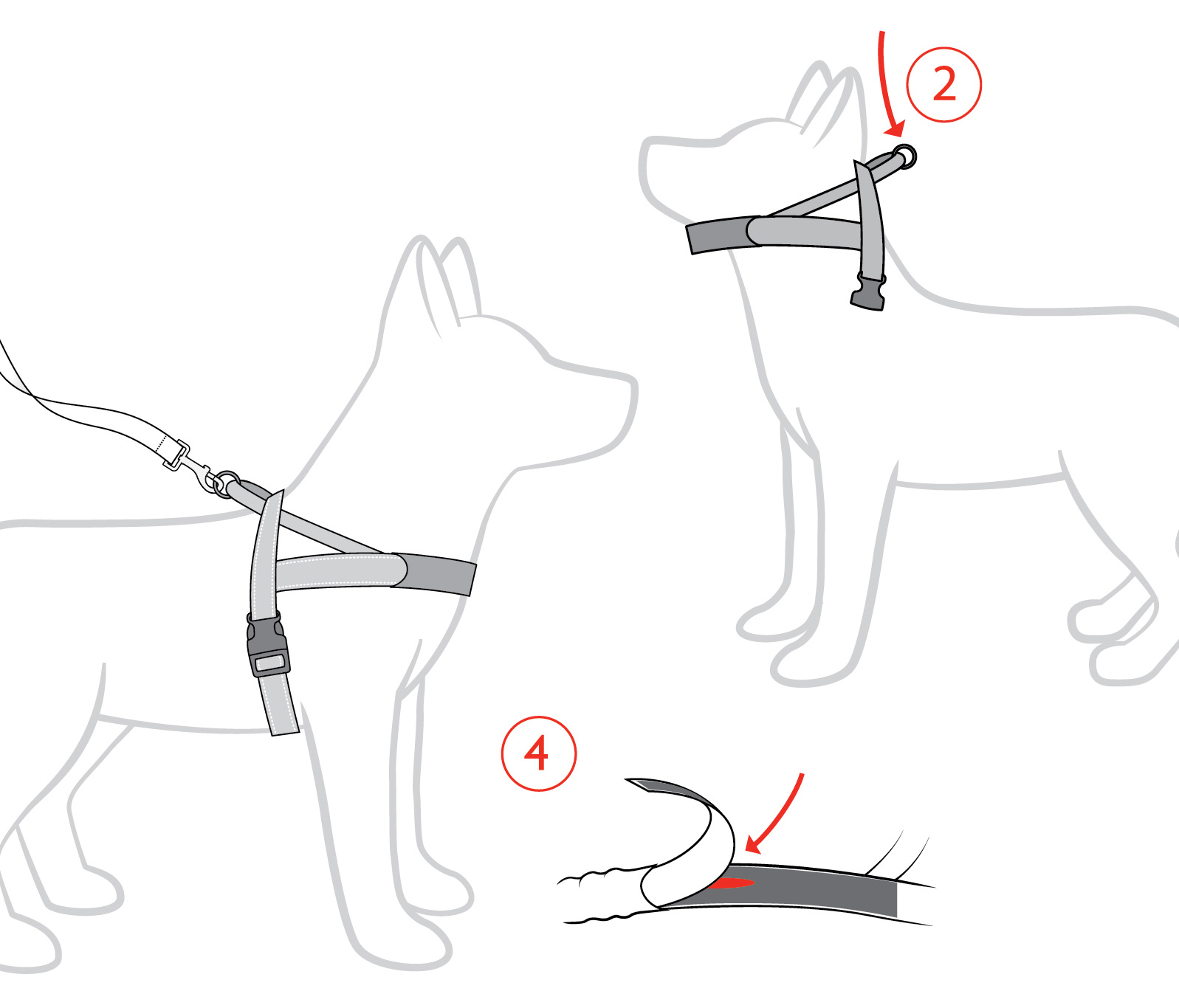 Quick harness instruction